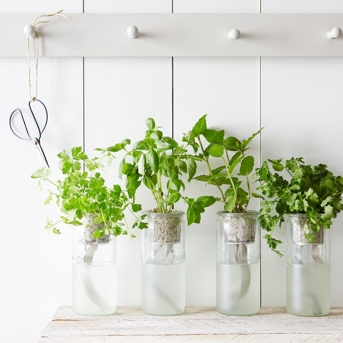 Herb Planter Eco Planter Herb Kit On Food52