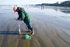 Meet the Humble Clam That's a Pacific Northwest Icon