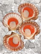 D46b0176 1eea 4239 bee7 daaaf0486cd1  scallops
