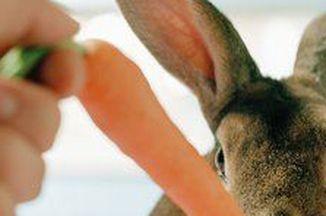 B81af1e8 d226 45f4 b3f9 c7314b6be3ce  rabbit