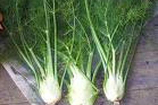 Savory Fennel Hazelnut Tart with Carmelized Onions