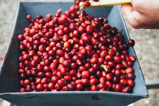 Could Coffee Be the Next Wine of California?