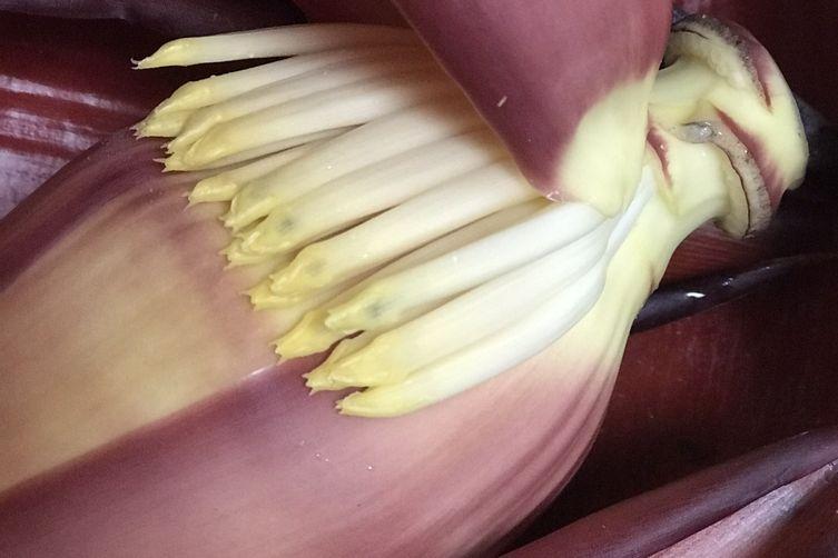 Banana blossom Fritters (pakoras)