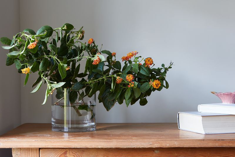 A pair of Lantana cuttings make a simple, lovely arrangement.