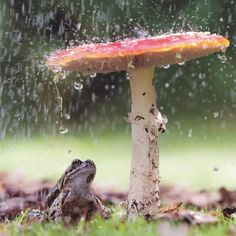 April Showers Mushroom, Prosciutto Pasta