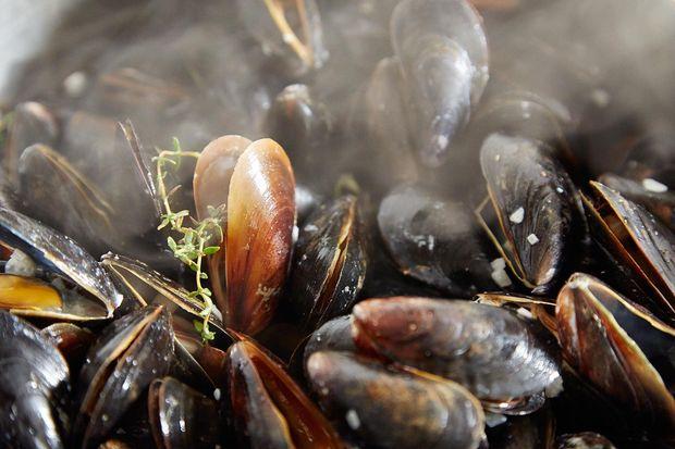 1b5afcfe e6aa 4f4f 9774 432e33ee05ce  2014 0325 finalist mussels dijonnaise 239