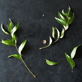 Curry Leaves and Your Favorite Ways to Use Them
