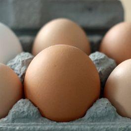 6f5f1e01 56d0 4dee a701 9a3a958a3ef1  eggs