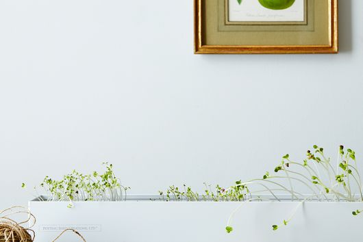 Microgreens Spice Window Box Kit