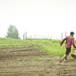 How to Cook Like a Farmer & Other Lessons from Beetlebung Farm