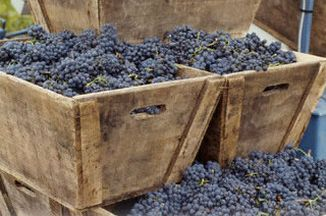 52f4a0cd a5d1 4e63 9b21 9ecce3a4ad8f  vineyards 5 cr