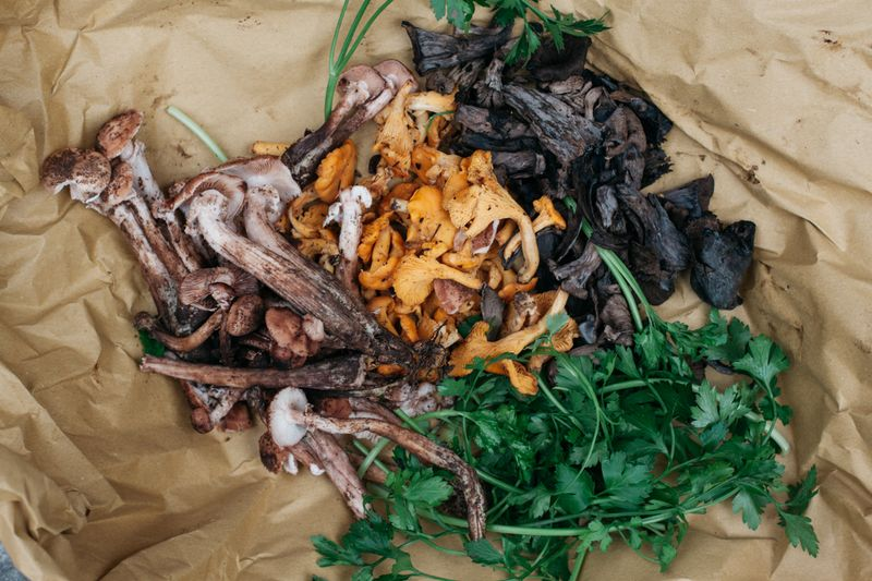 Foraged chiodini and black and yellow chantarelle mushrooms.