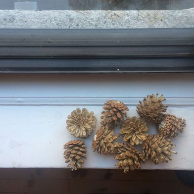 How We Bleached Pine Cones for our Holiday Pop-Up