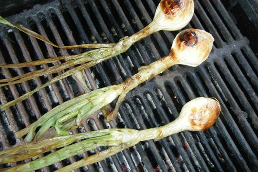 The Evasive Calçot and the Promiscuous Romesco