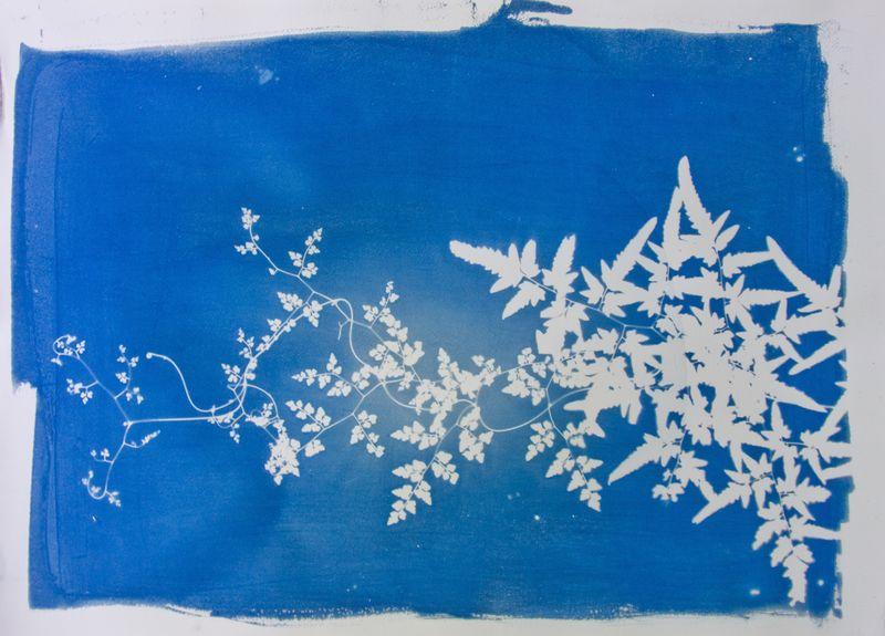 cyanotype rinne allen