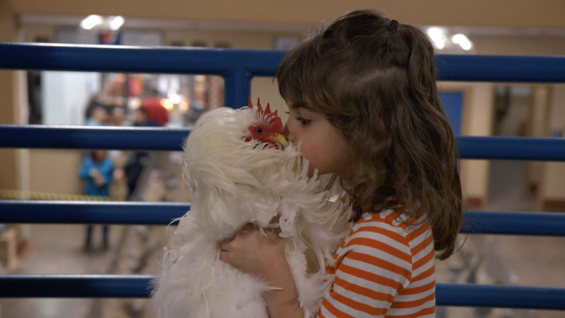 A small child lovingly caressing a chicken.