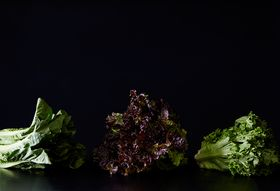6c74d47c aeea 44d1 a9d2 7fb645a9dc49  2015 0427 leaf lettuces mark weinberg 0026