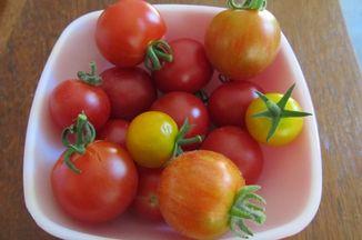837f01c2 c0fb 4ac7 8de6 430bb8b10ed8  tomatoes2