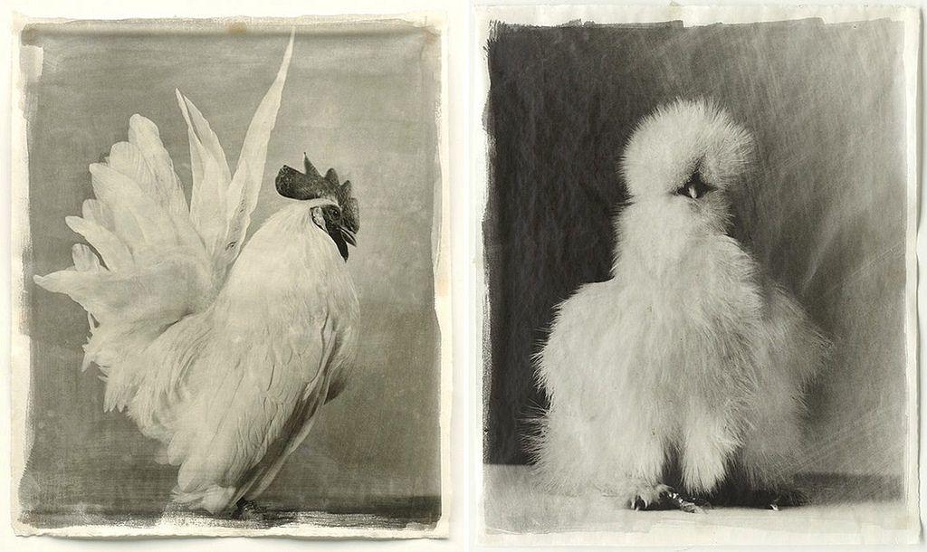 Jean Pagliuso Book of Chickens Slate
