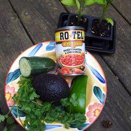 9f6a3653 b34b 4fa1 a038 7bfff6fa6046  avocado gazpacho