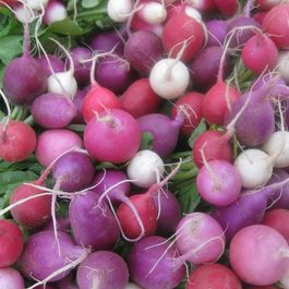 Beacb222 72d4 4875 9fed 12dea97c19d4  radishes