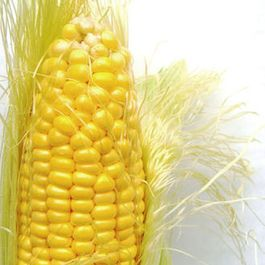 State By State: The Struggle For Consensus On Genetically Modified Foods
