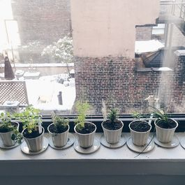 The Birth of Our Windowsill Herb Garden