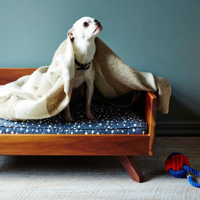 Dog Sleep In The Bed