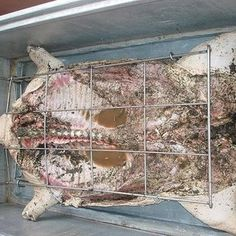 Caja China / Cajun Microwave Cuban Pig Roast Recipe