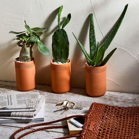 Terra Cotta Indoor Grow Kits