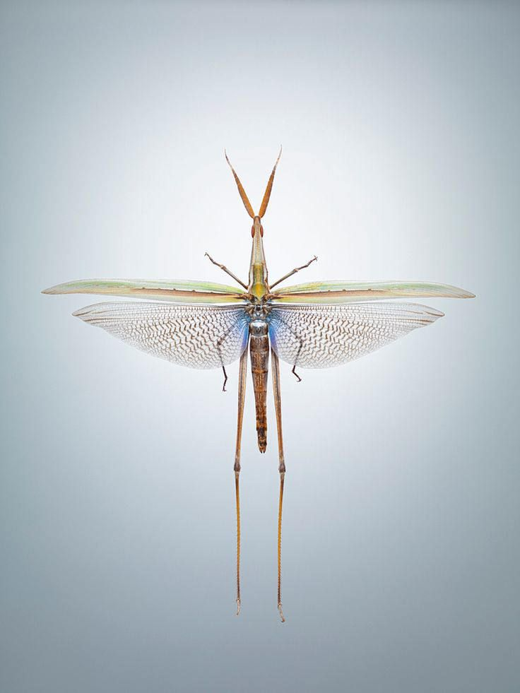 Cereal Magazine Illuminated Insects