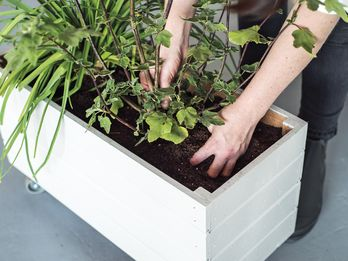 The Craftiest Way to Move Plants Indoors and Outdoors With Ease