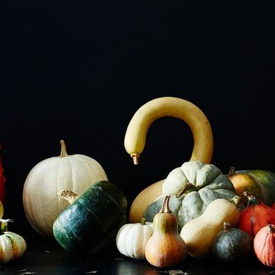 What's the Difference Between a Squash and a Pumpkin? (& Other Hard Questions)