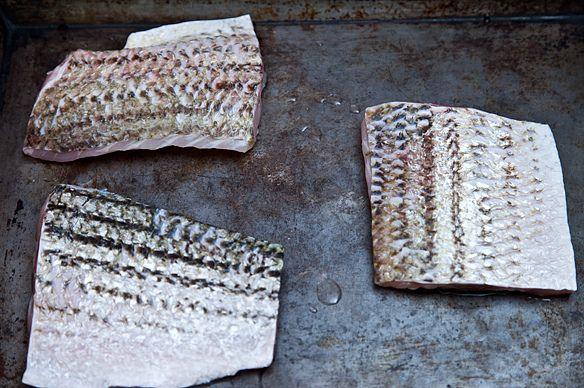 Striped bass fillets