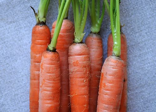 Your Best Carrot Recipe