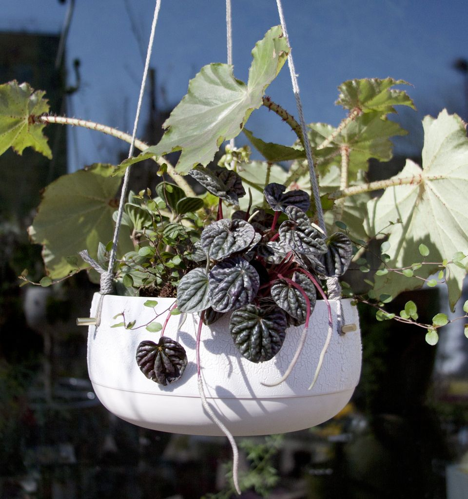 Tara Heibel Sprout Home Pigeon Toe Hanging Planter