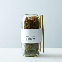 Moss & Sedum Terrarium Bottle
