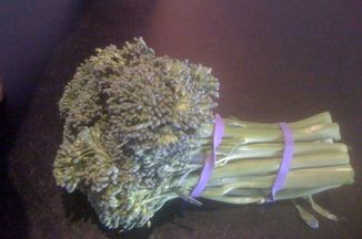 E1c0947c 0e5d 4842 81ee 0819479f7afd  broccoli 016