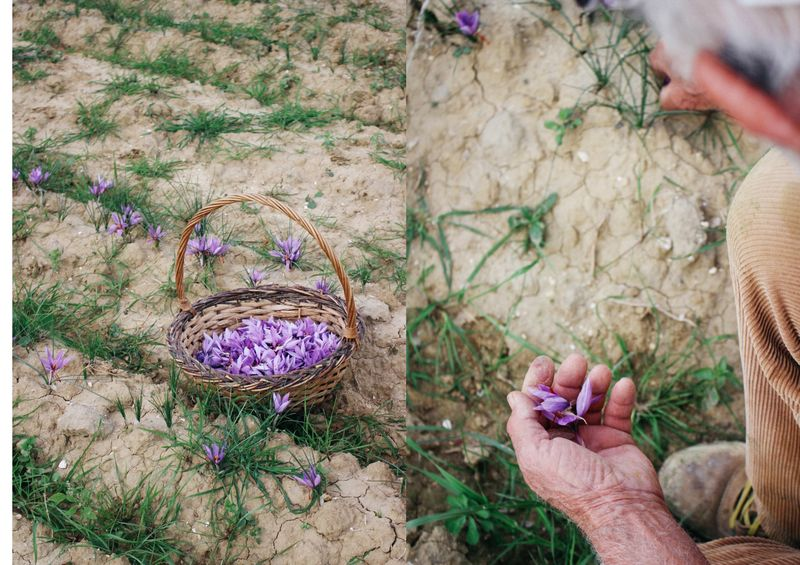 There's saffron inside those crocus flowers!