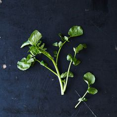 Watercress and Our 10 Favorite Ways to Use It