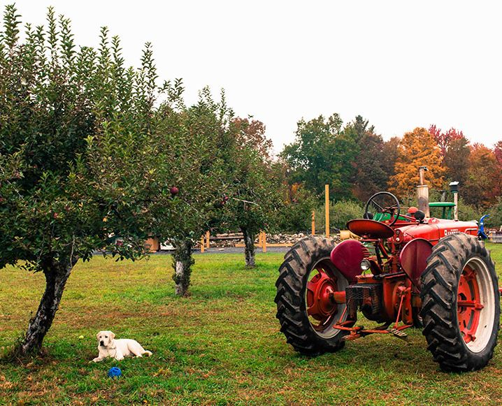 Tractor at Westwind Orchard