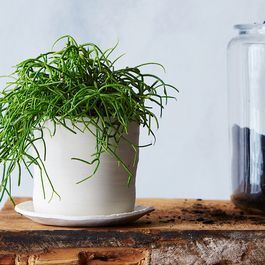 How to Bring a Dying House Plant Back from the Brink