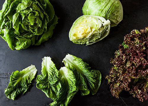 Your Best Lettuce