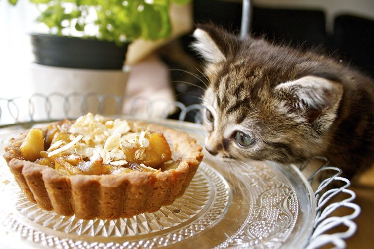 'In a sea of honey' and apple tartlets with a olive oil and buckwheat crust
