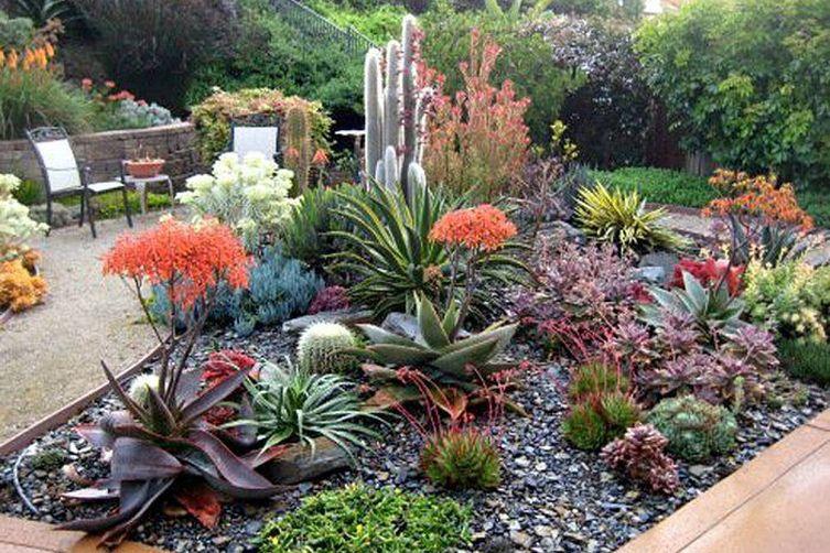 5 Succulent Landscaping Ideas