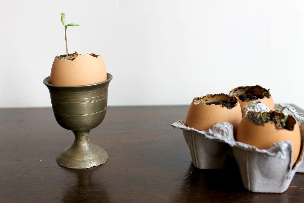 eggshell seed starter pots