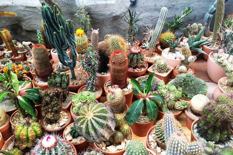 Now that's what we call a cactus store!