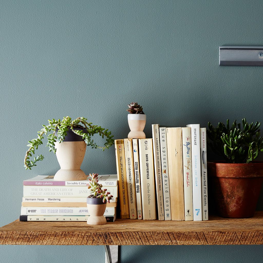 Books and Plants on a Shelf