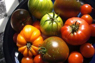 Dc493fe7 ed4b 445f 8275 c727e3c4f8fc  heirloom tomatoes