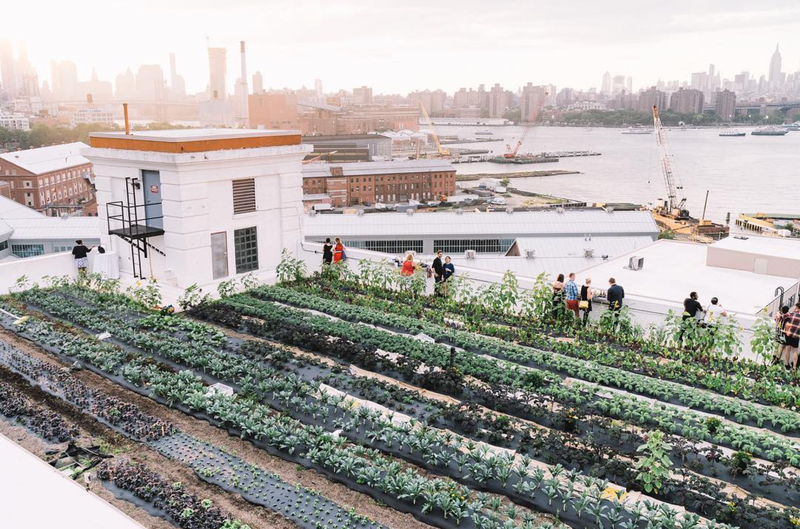 7 Offbeat Urban Farms Found Around the World